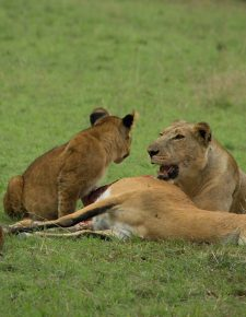 4 Day Murchison Big Five Safari