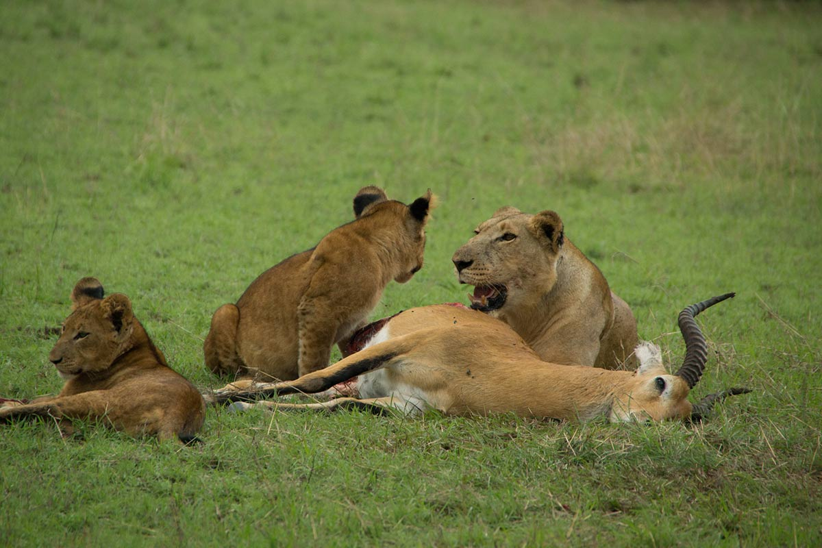 4 Day Africa Big Five Safari