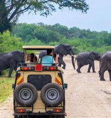 Uganda Wildlife safaris, Uganda Safari Parks, Big five game drive
