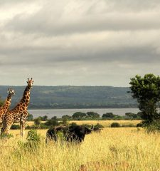 Safari Destinations - Uganda Safaris